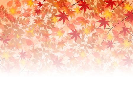 Maple autumn leaves background 矢量图片