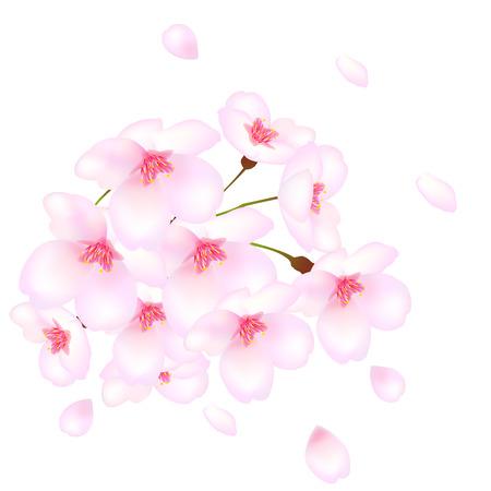 cherry tree: Cherry tree cherry spring