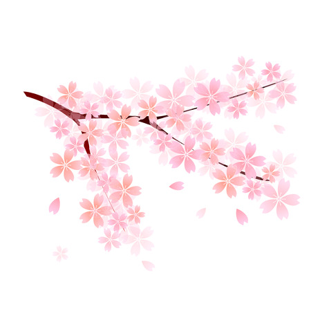 cherry tree: Cherry tree Illustration