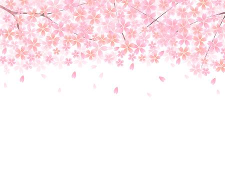 Sakura fondo cerezo Foto de archivo - 24544083