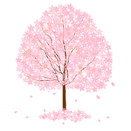 Cherry pink background Vector