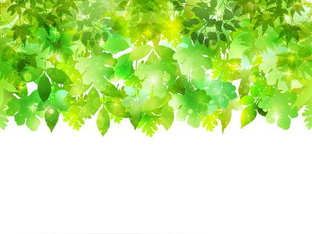 植物の葉の背景