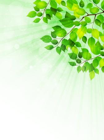 leaf background: Plant leaf background Illustration
