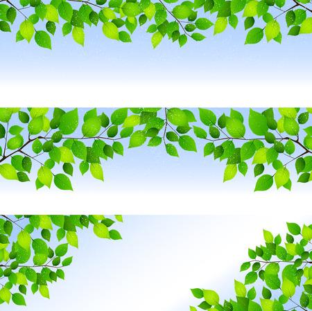 leaf background: Fresh green leaf background