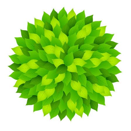 新鮮な緑の葉円  イラスト・ベクター素材