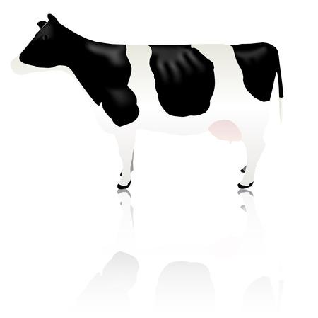 Cow animal livestock