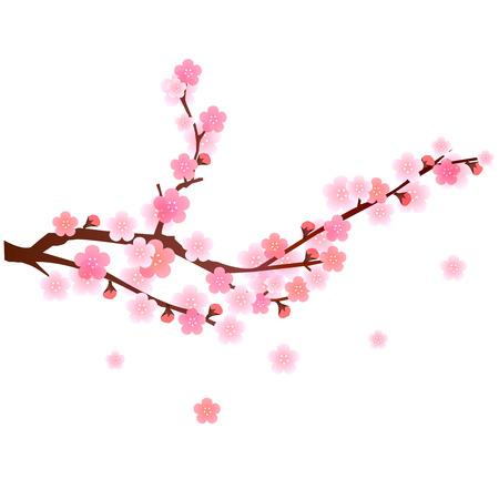 Plum fleur fond