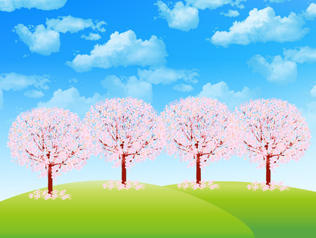 plateau of flowers: Cherry blossom background