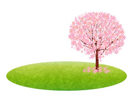 plateau: Cherry blossom background