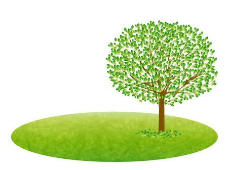 leaf tree: Albero a foglia verde fresco