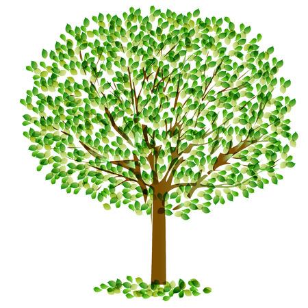 aoba: Leaf tree fresh green Illustration