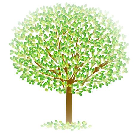ツリーの葉新緑 写真素材 - 35980713