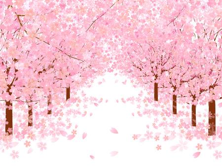 arbol de cerezo: Fondo de los cerezos en flor