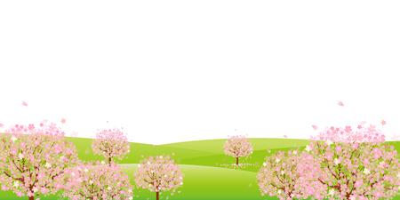 flor de cerezo: Fondo de los cerezos en flor
