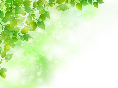 Fondo de la hoja verde fresco Ilustración de vector