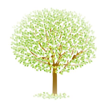 ツリーの葉新緑