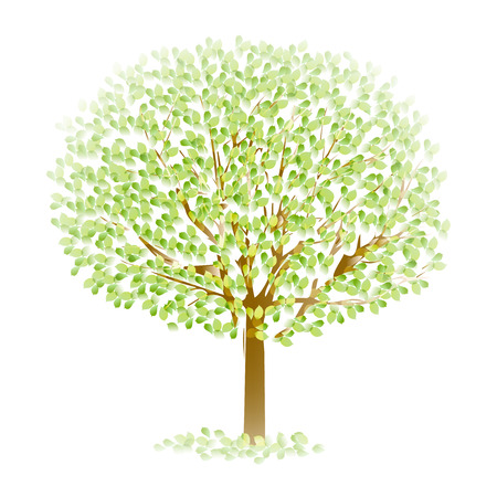 young leaf: Tree leaf fresh green Illustration