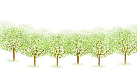 ツリーの葉新緑 写真素材 - 36667357