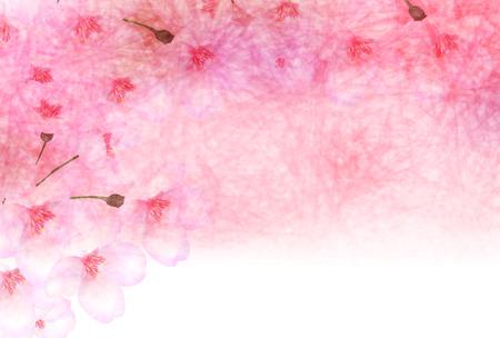 paper background: Cherry blossom background