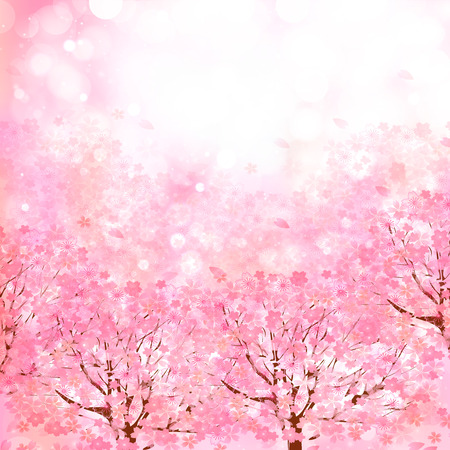 on pink: Cherry blossom background