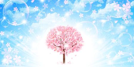 cerisier fleur: Arrière-plan de fleurs de cerisier