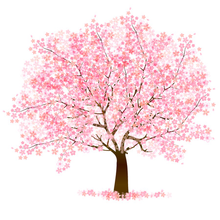 cherry: Cherry blossom background