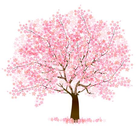 arbol de cerezo: Los cerezos en flor de fondo Vectores