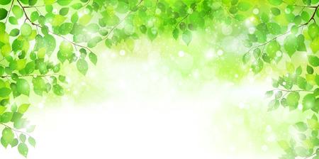 Leaf fresh green background  イラスト・ベクター素材