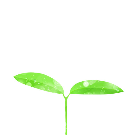 Leaf bud background 矢量图像