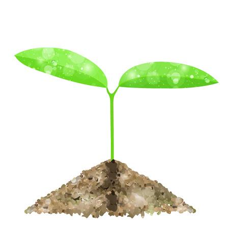 Leaf bud background Çizim