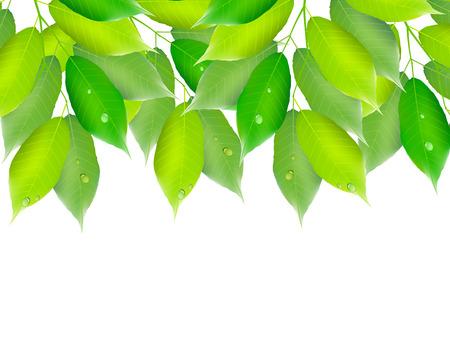 aoba: Leaf fresh green background Illustration