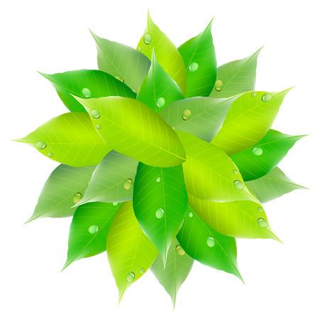 葉新鮮な緑色の円