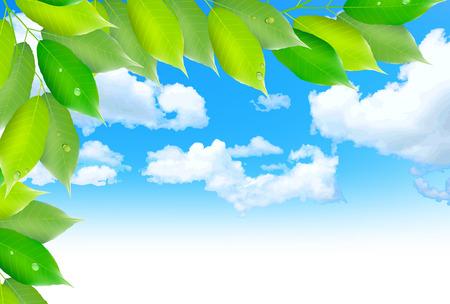 young leaf: Leaf fresh green background Illustration