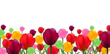 Arrière-plan de fleur de tulipes Banque d'images - 38104971