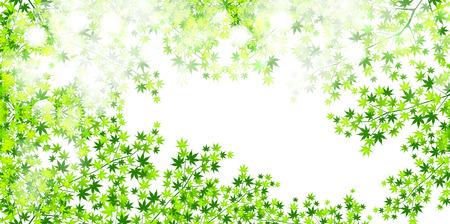 aoba: Leaf maple background Illustration
