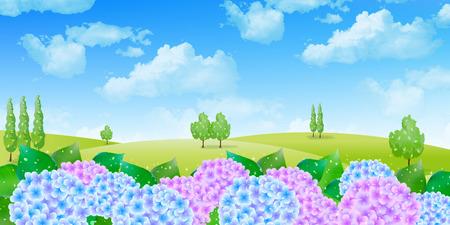 the rainy season: Hydrangea rainy season background Illustration