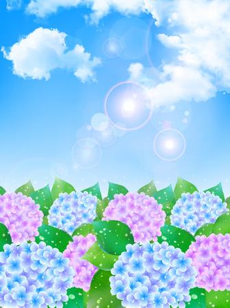 the season: Hydrangea rainy season background Illustration