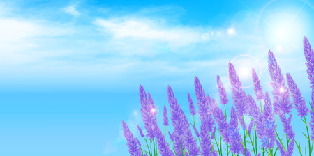 erva: Lavender erva fundo