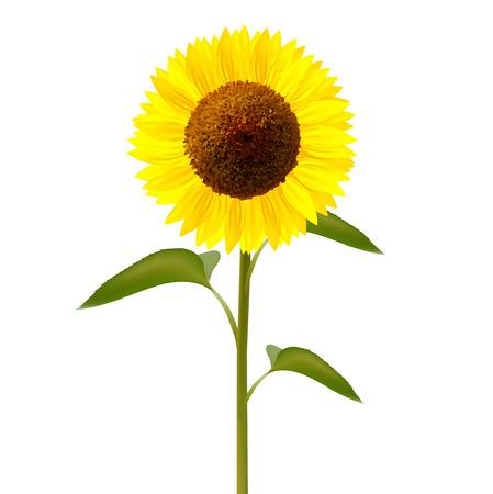 Girasole fiore icona