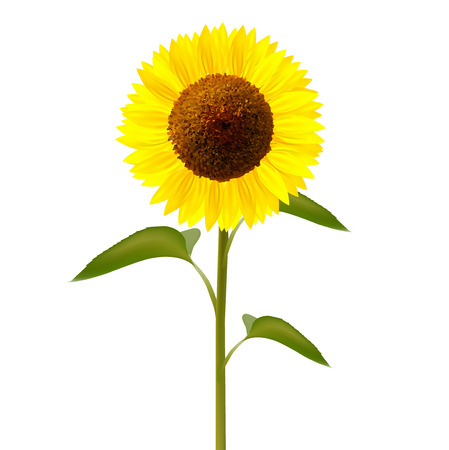 sunflower: Sunflower flower icon