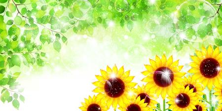 Sunflower leaf background