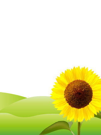 grasslands: Sunflower flower background