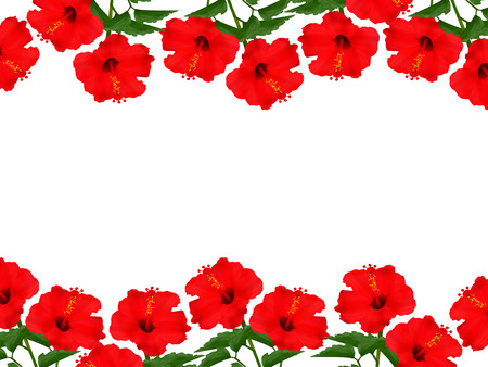 flowers background: Hibisco florece el fondo