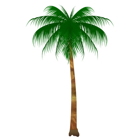 Tree icon of palm palm 일러스트