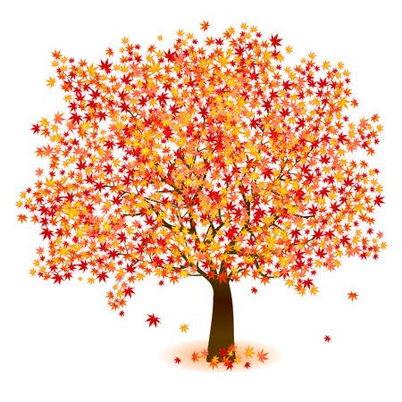 foliage tree: Maple foliage tree Illustration