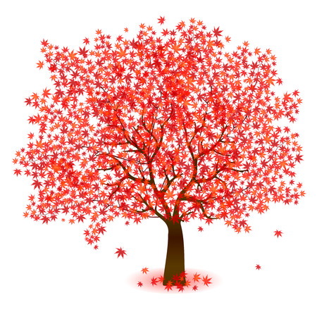 Maple foliage tree Illustration
