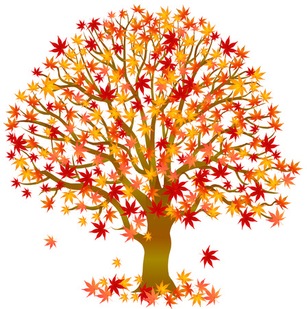 arbre automne: Autumn leaves �rable Illustration