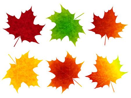 カエデの葉のアイコン
