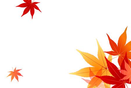 Maple foliage background