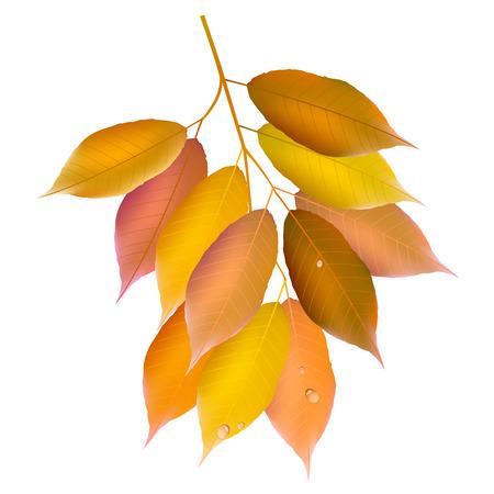 maple tree: Maple tree icon Illustration